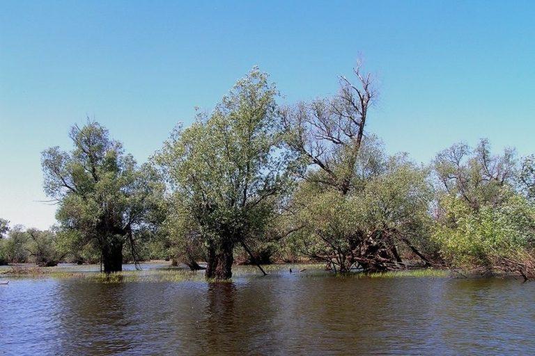 Уровень воды в Сузуне.