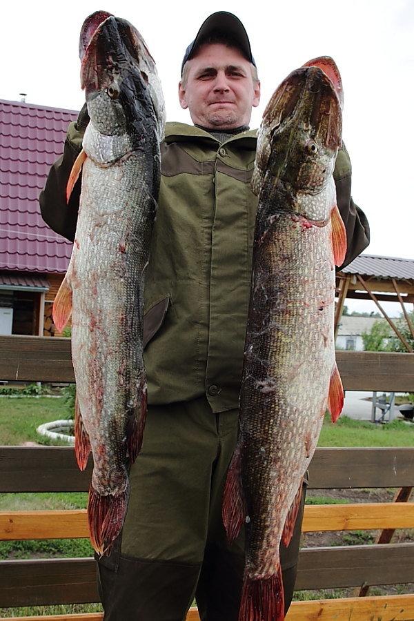 трофейная рыбалка Сузунская Заимка