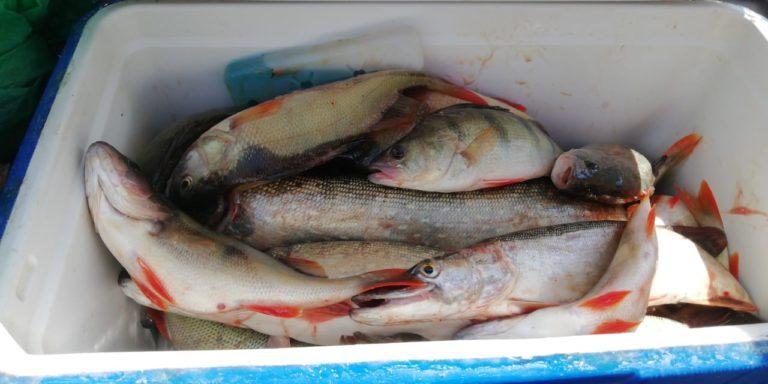 Рыбалка в июле. Долгожданный клёв.